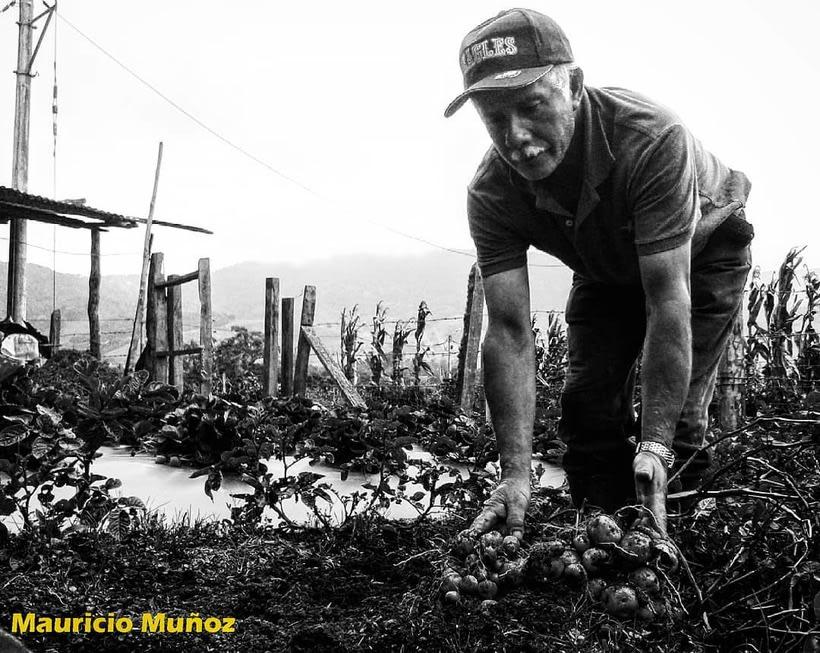 Los reales Colombianos de  bien.  10