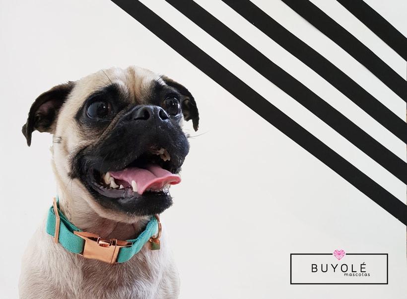 Buyolé Mascotas. Accesorios de lujo para tu mascota. 4