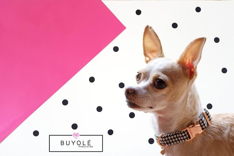 Buyolé Mascotas. Accesorios de lujo para tu mascota. 7