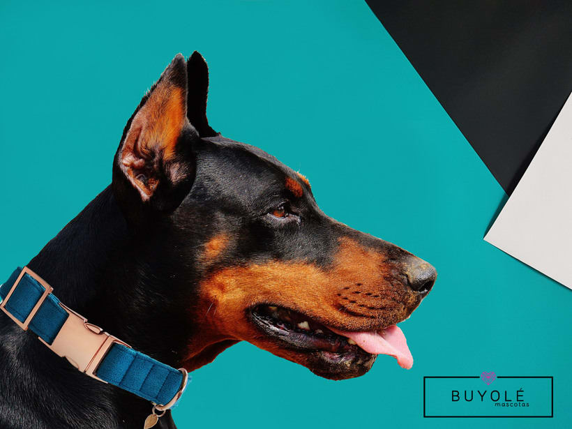 Buyolé Mascotas. Accesorios de lujo para tu mascota. 8