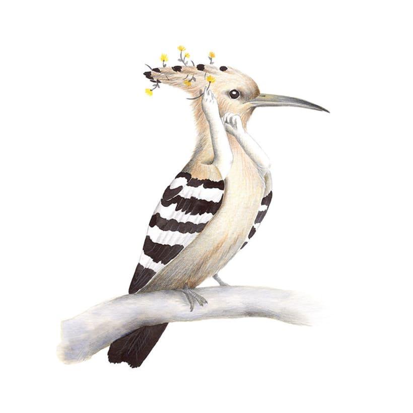 Aves 11