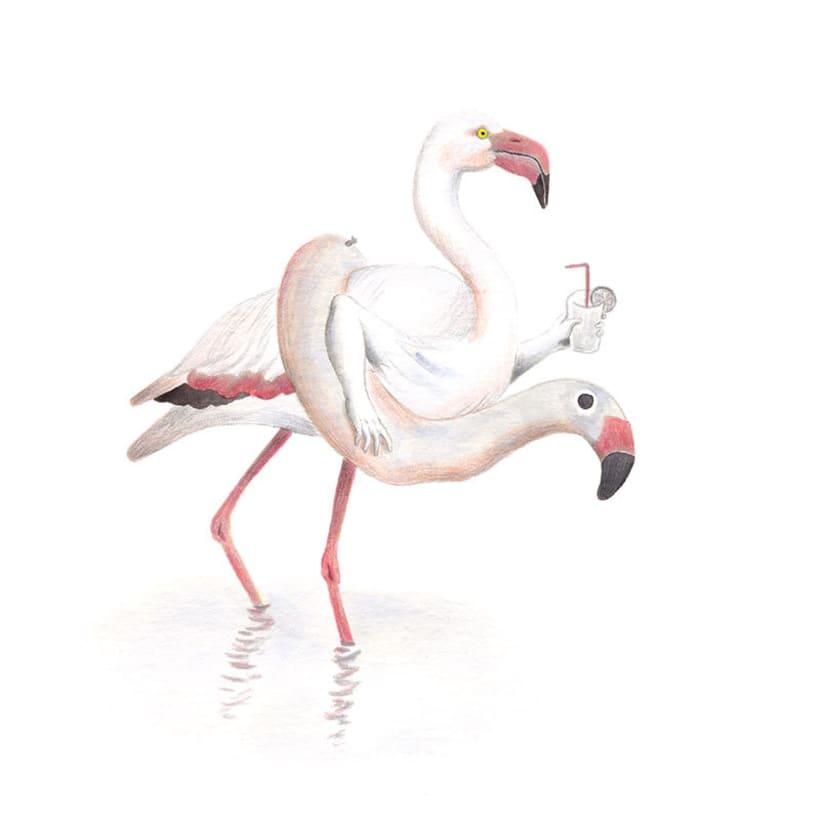 Aves 4