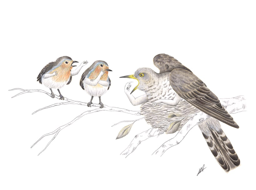 Aves 15