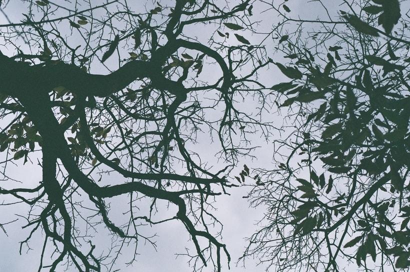 Fotografía Analógica / 35mm / 120mm 6