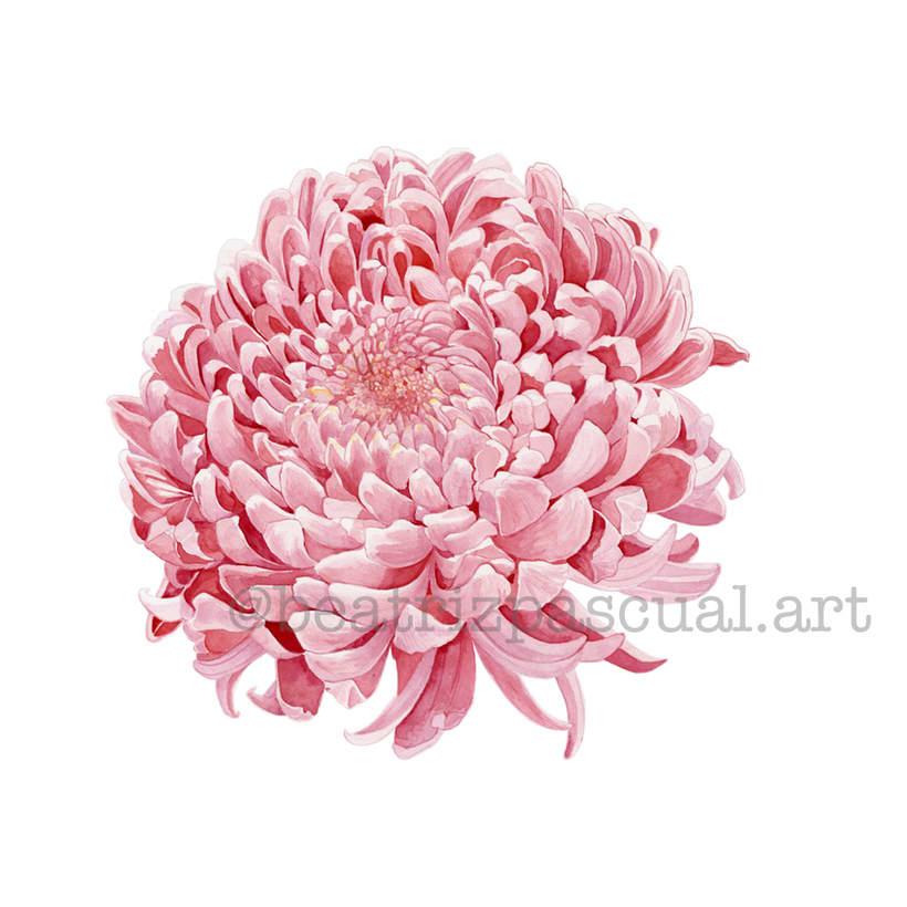 Mi Proyecto del curso: Ilustración botánica con acuarela 5
