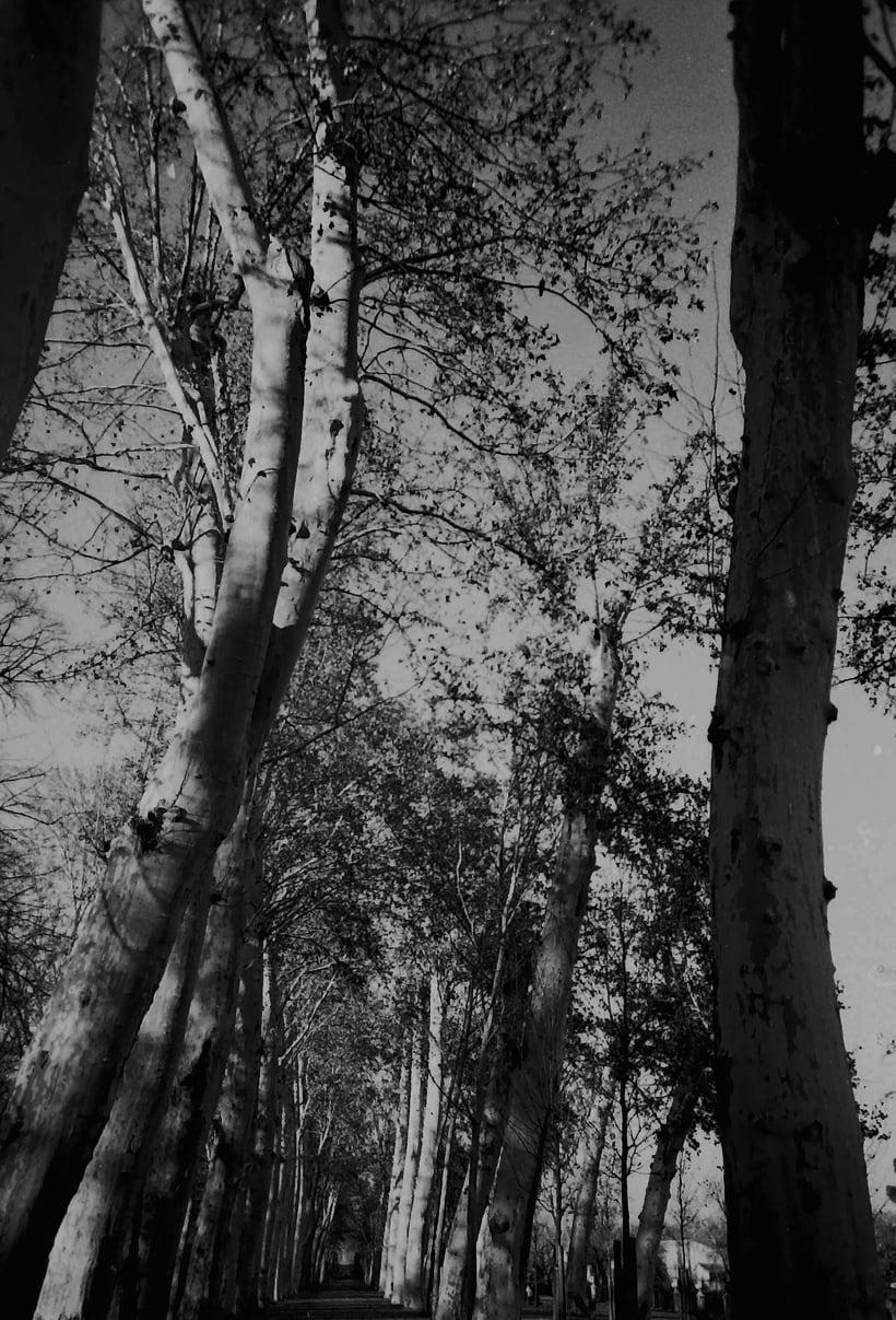 Fotografía Analógica / 35mm / 120mm 11