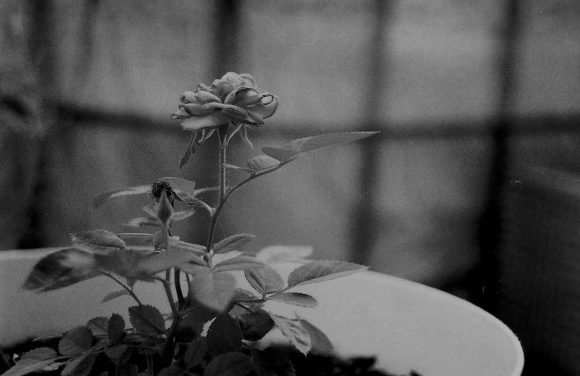 Fotografía Analógica / 35mm / 120mm 17