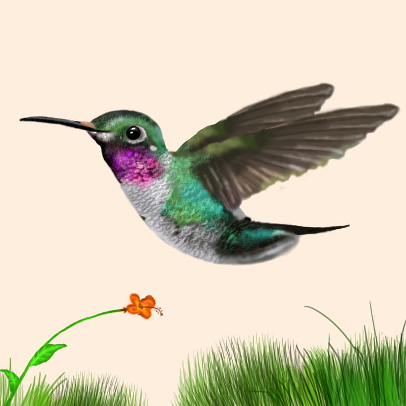 Aves - Biodiversidad 22