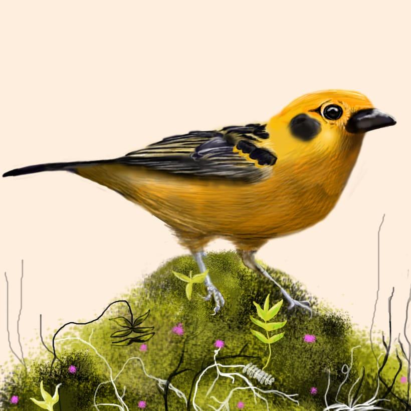 Aves - Biodiversidad 7