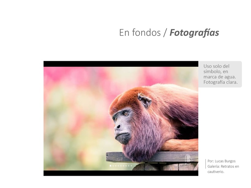 Brand: Fotógrafo 9