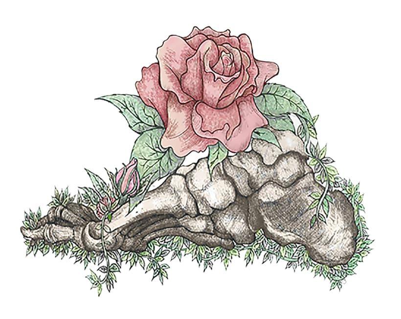 Anatomía viva... ilustrada 5