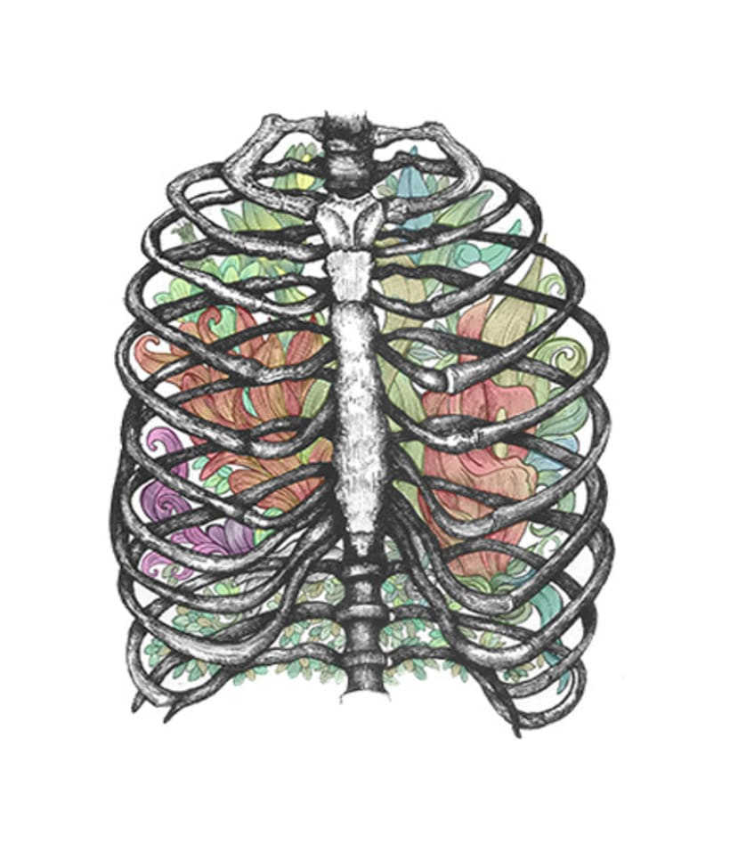 Anatomía viva... ilustrada 7