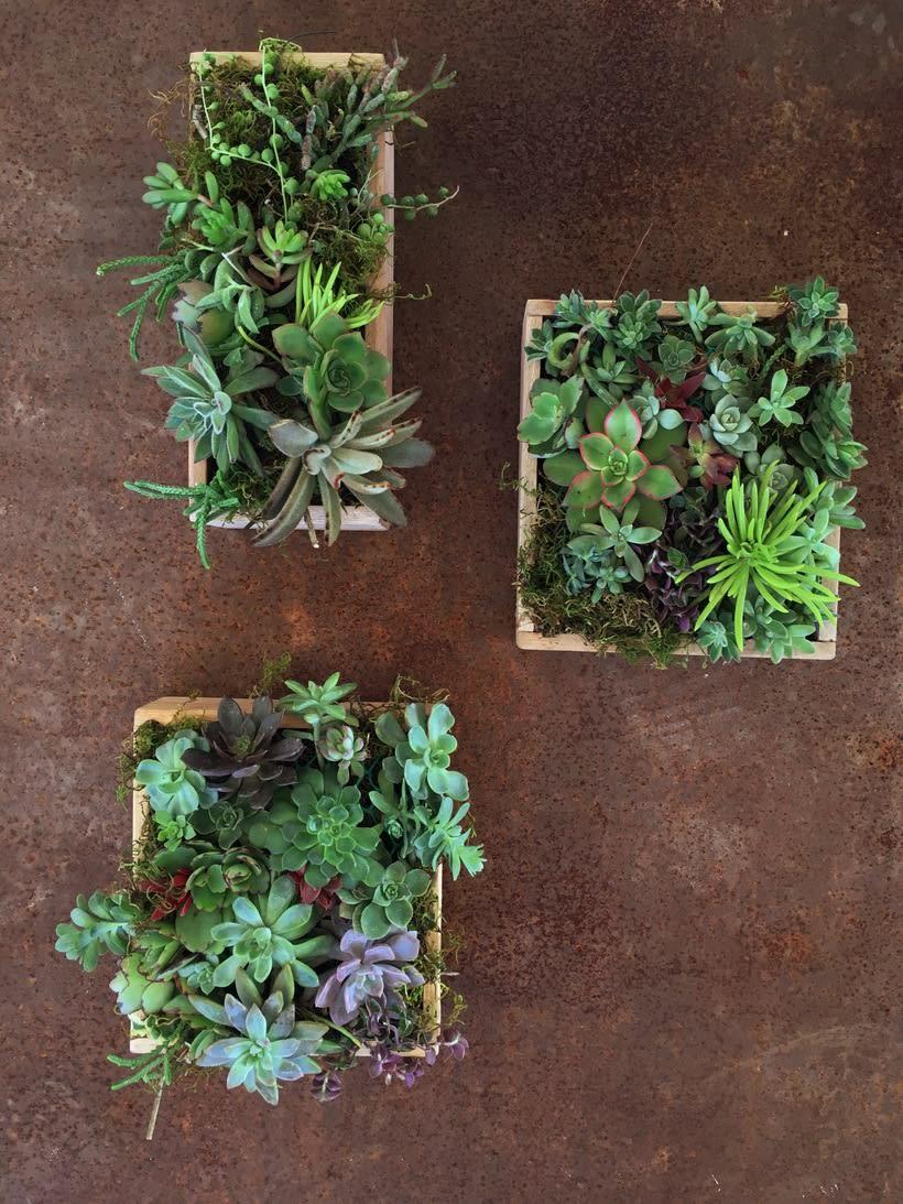 Mi Proyecto del curso: Diseño y creación de composiciones botánicas 0