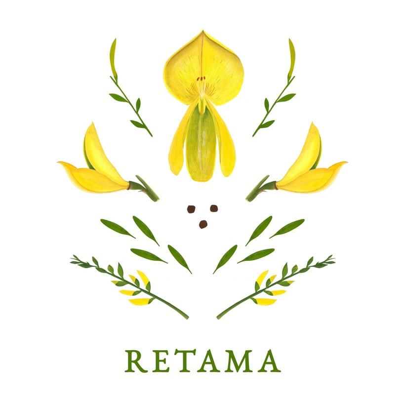 RETAMA 2