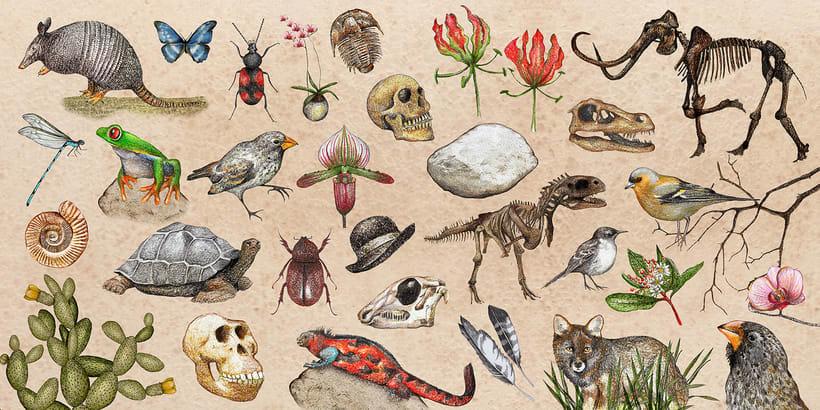 Charles Darwin. El viaje que cambió la historia 3