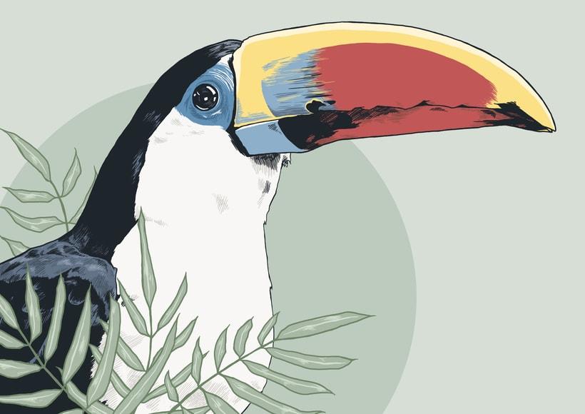 Práctica - Ilustración de fauna - Tucán -1