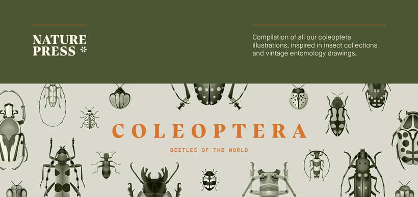 Coleoptera. Colección de ilustraciones de escarabajos 0