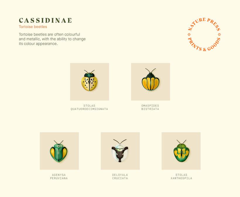 Coleoptera. Colección de ilustraciones de escarabajos 4