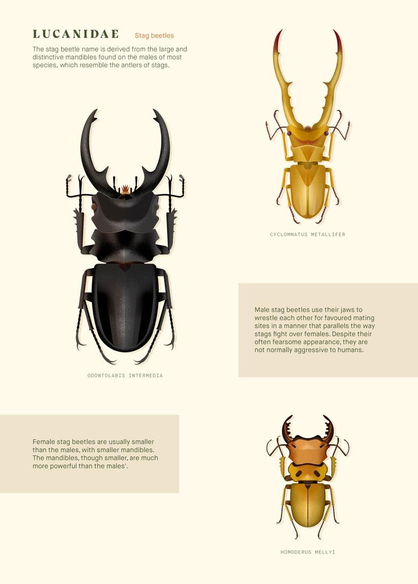 Coleoptera. Colección de ilustraciones de escarabajos 2