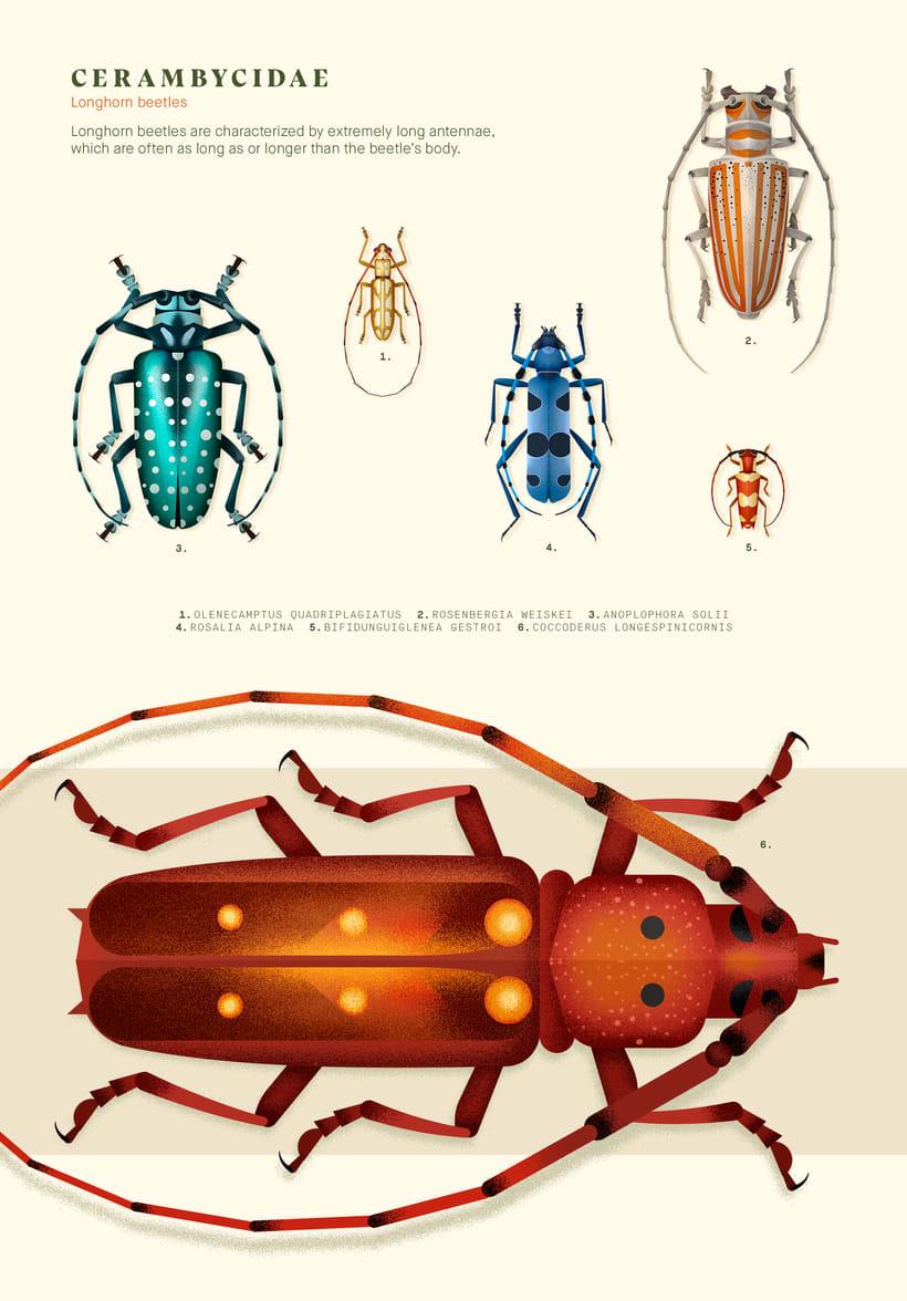 Coleoptera. Colección de ilustraciones de escarabajos 3