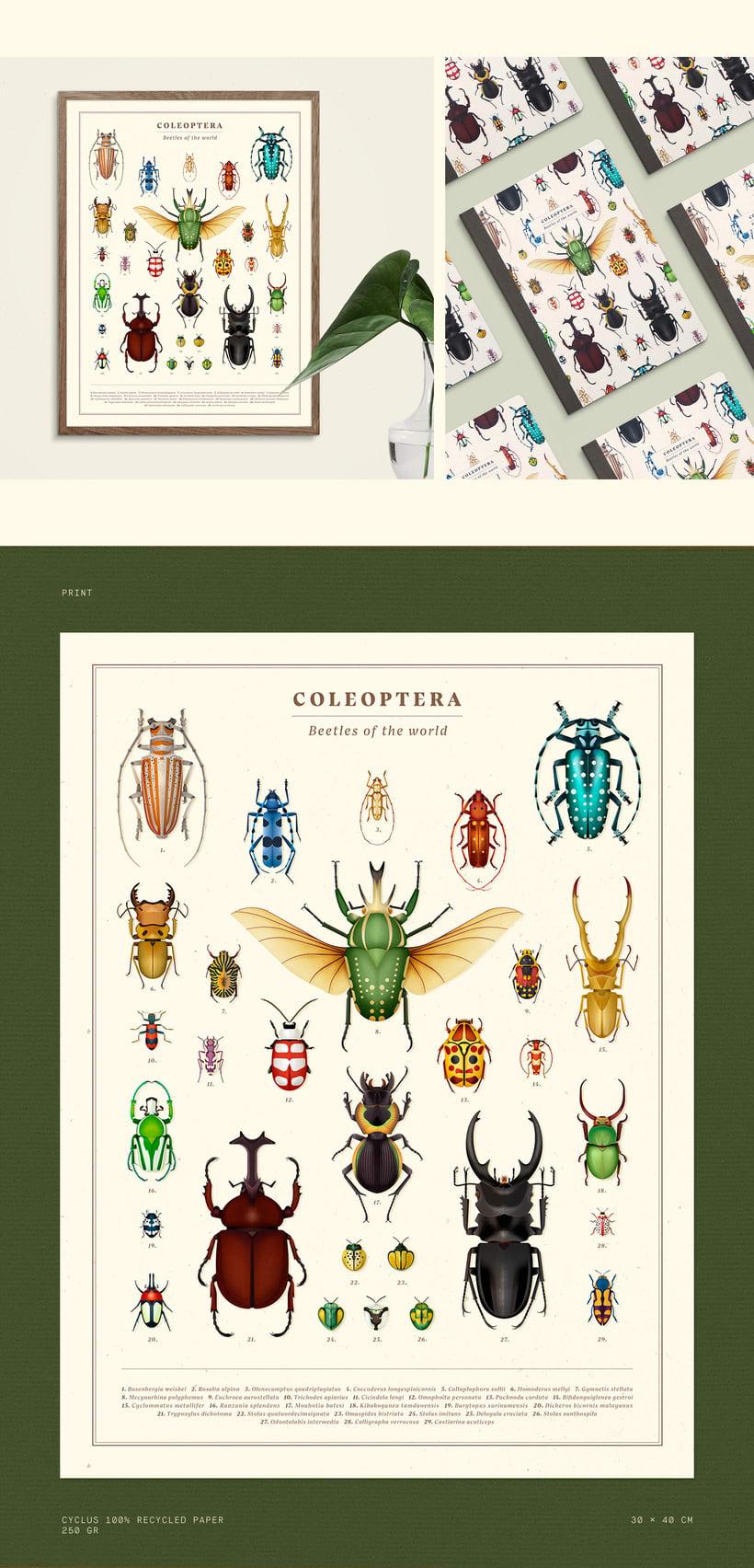 Coleoptera. Colección de ilustraciones de escarabajos 5