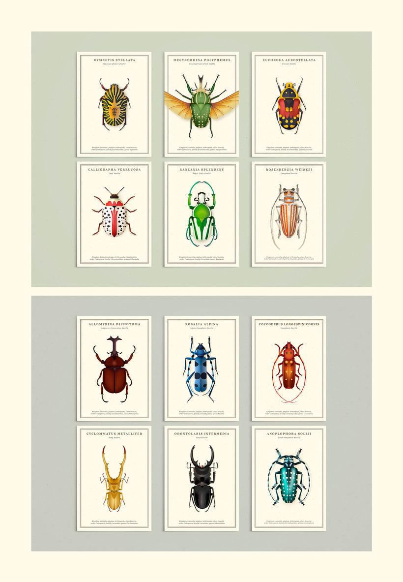 Coleoptera. Colección de ilustraciones de escarabajos 6