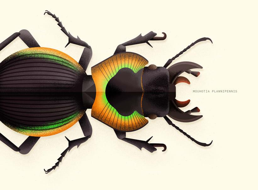 Coleoptera. Colección de ilustraciones de escarabajos 7