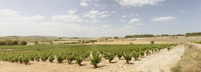 Reportaje de Els alforins pra Cuina.cat 5