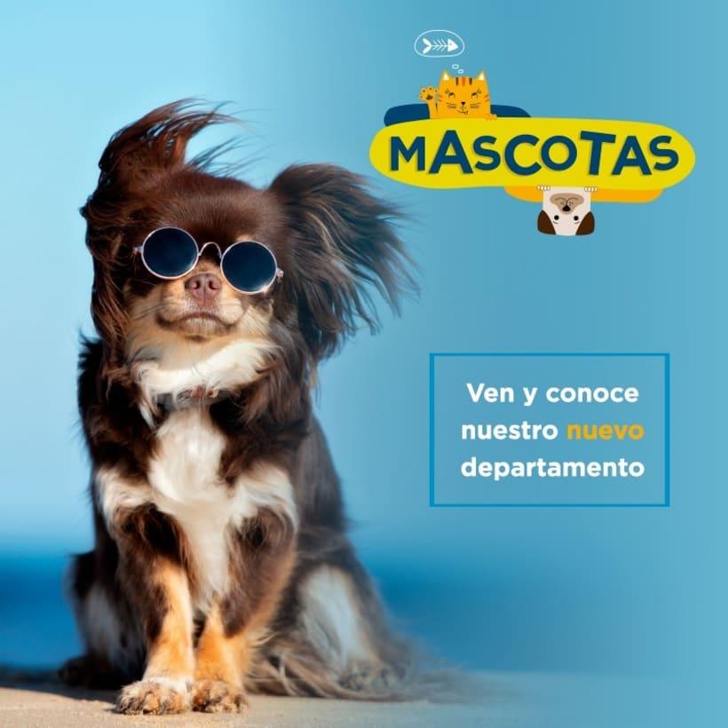 Mi Proyecto del curso: Nuevo departamento Mascotas 5