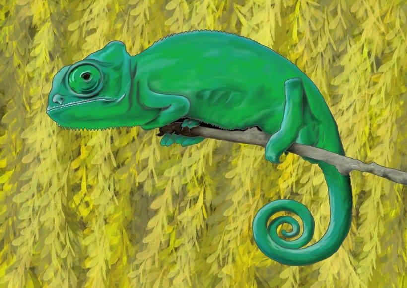Animal Illustration 0