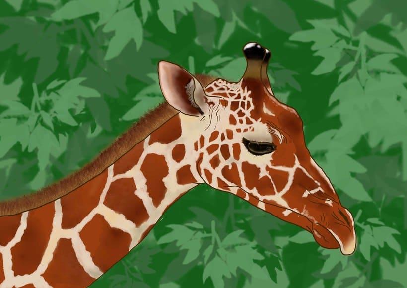 Animal Illustration 1