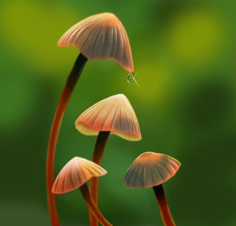 Mushrooms 0