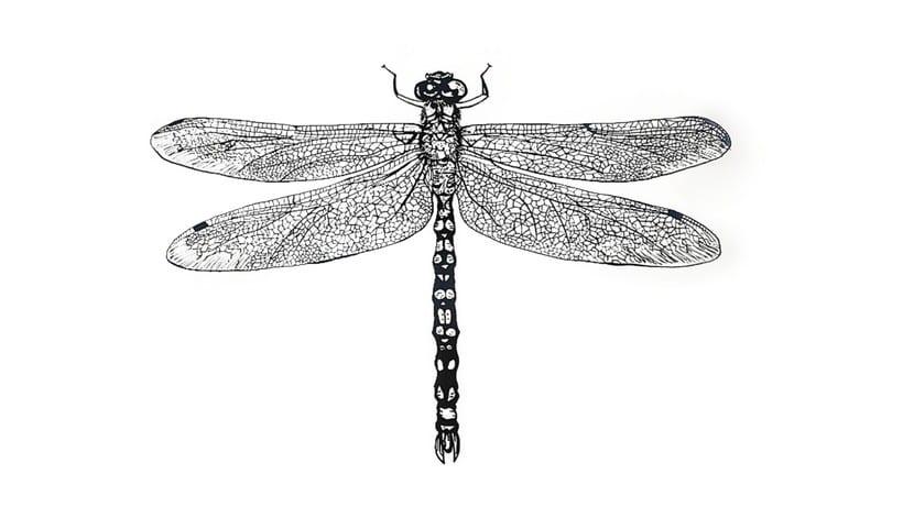 Dragon-fly 0