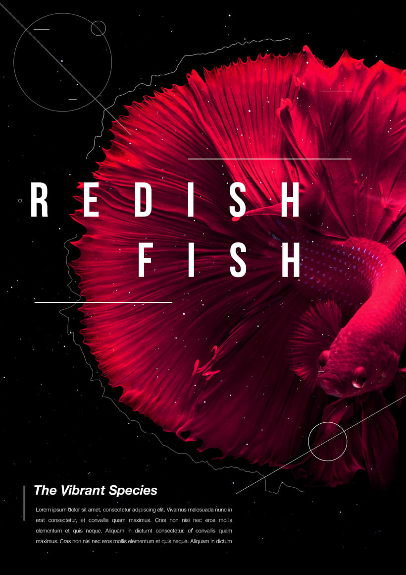 Poster Design  | The Vibrant Species series | -1