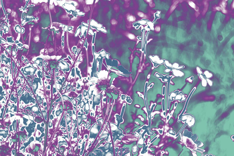 Manipulated daisies -1