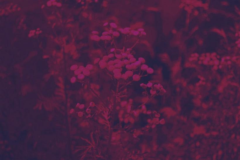 enManipulated Flowers -1