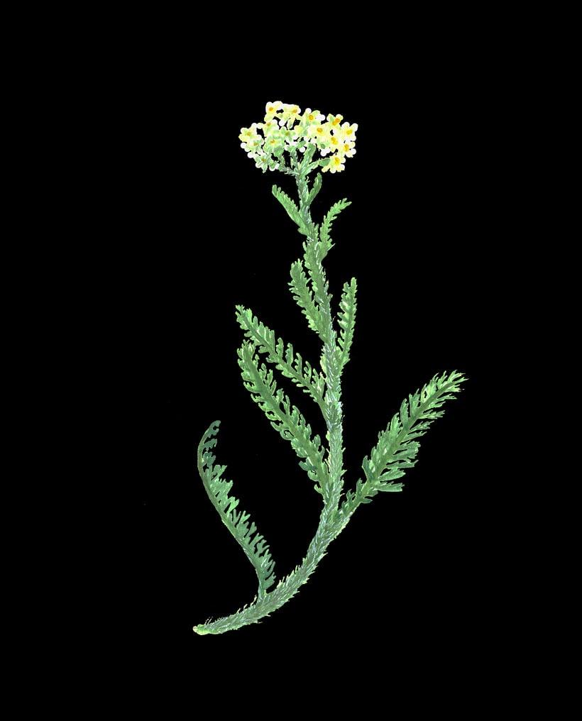 herbarium 0