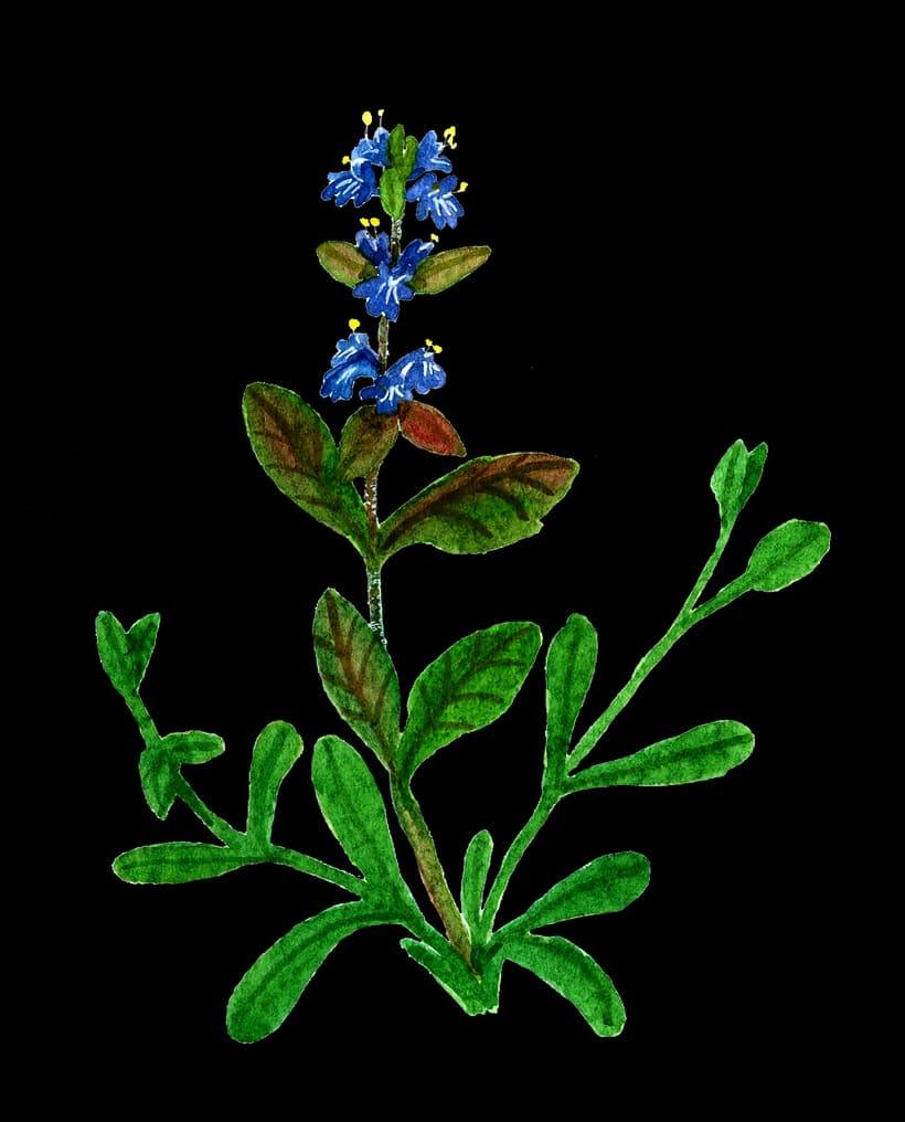 herbarium 2