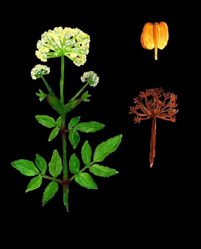 herbarium 3