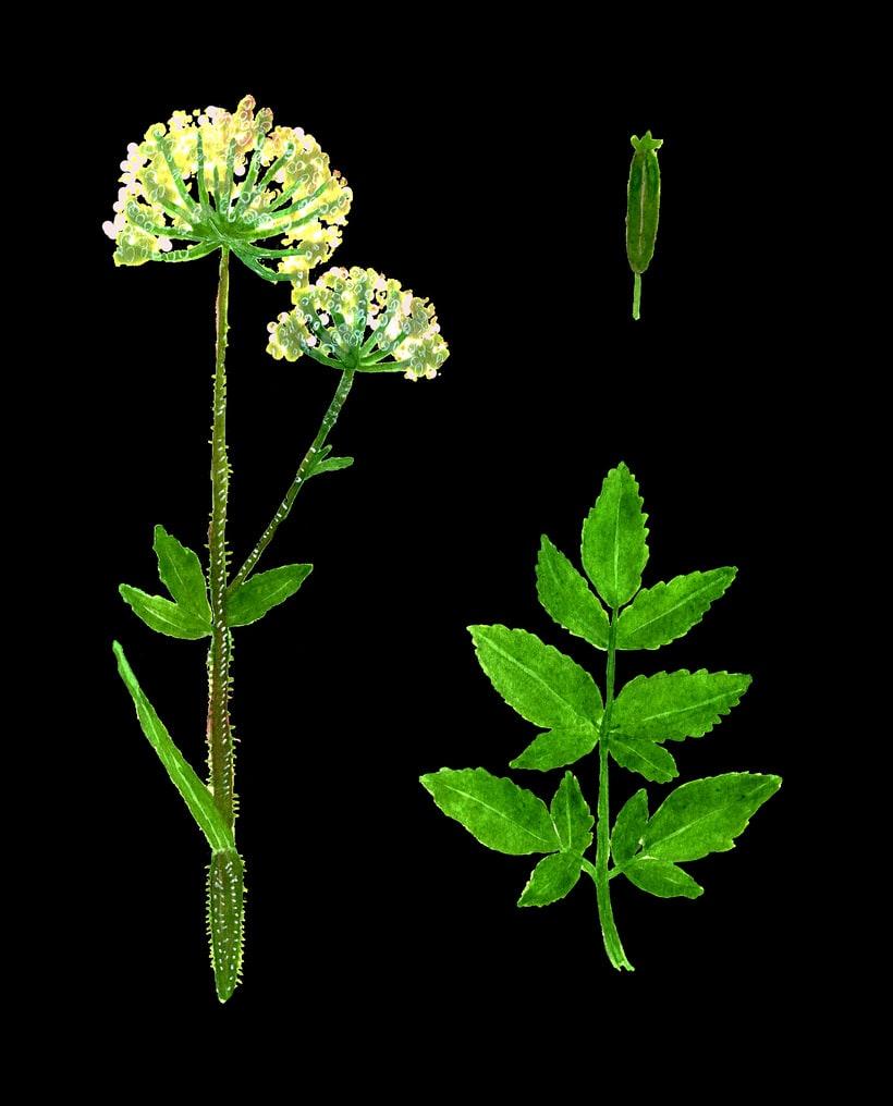 herbarium 5