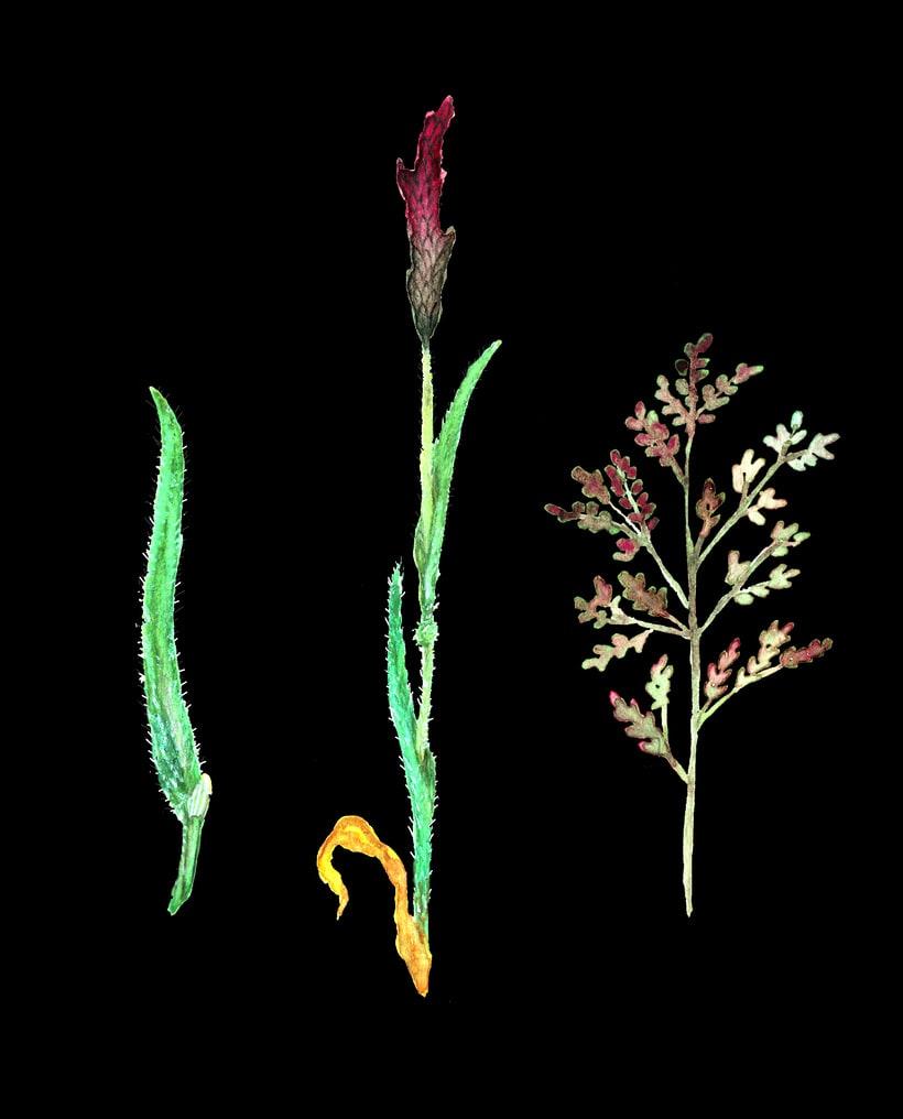 herbarium 8
