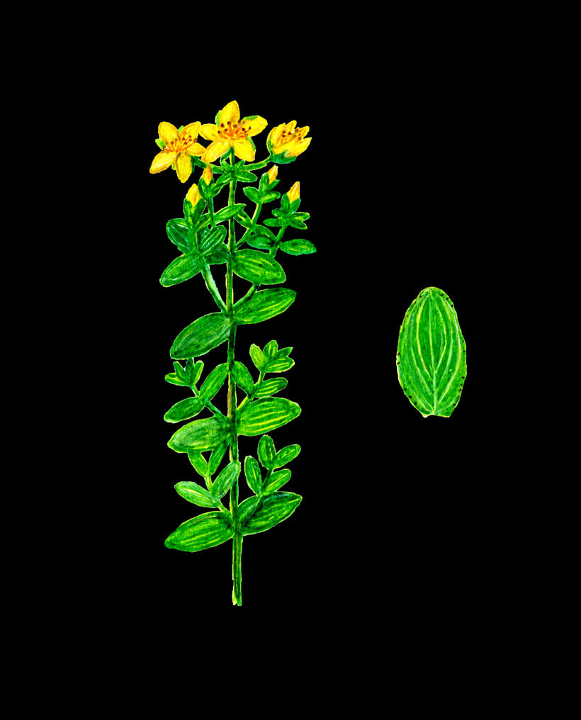 herbarium 9