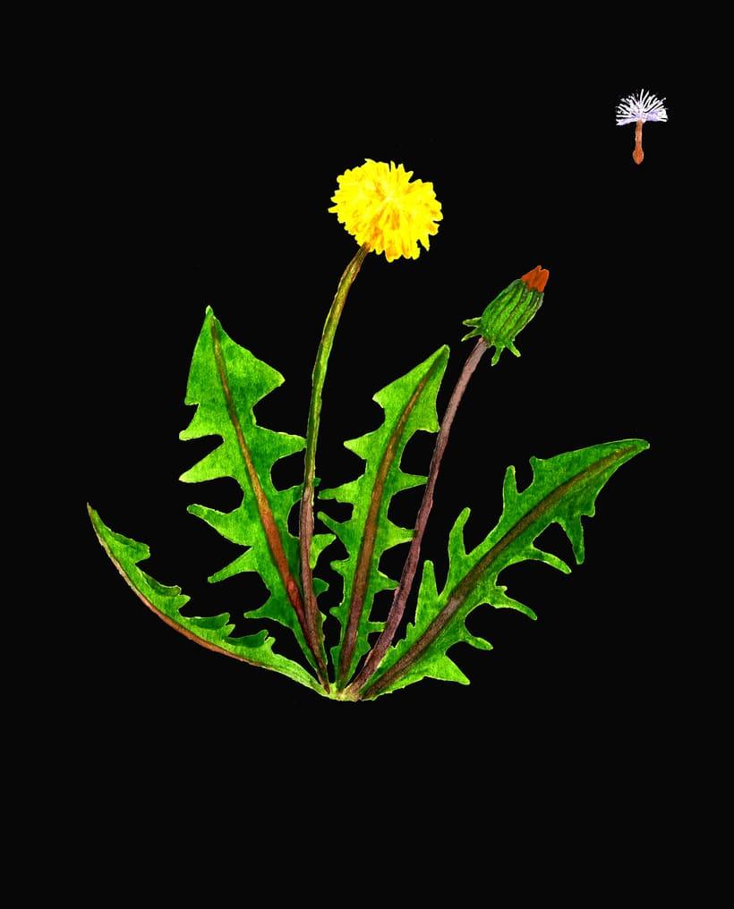 herbarium 11