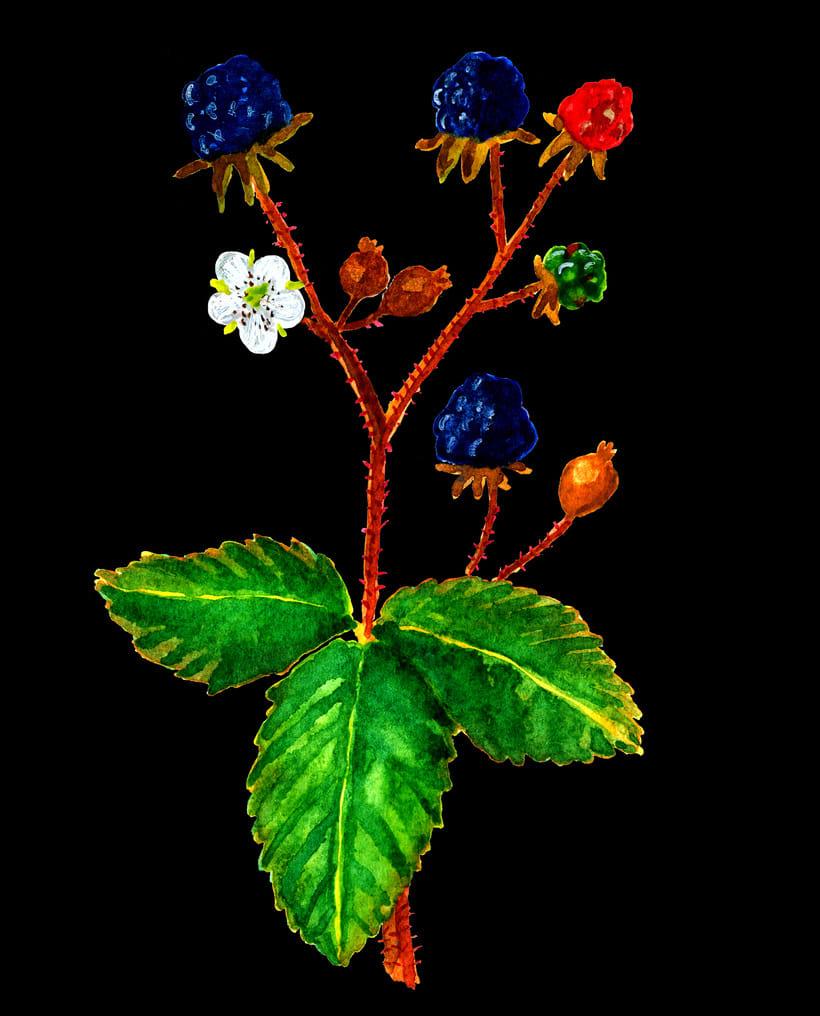 herbarium 12