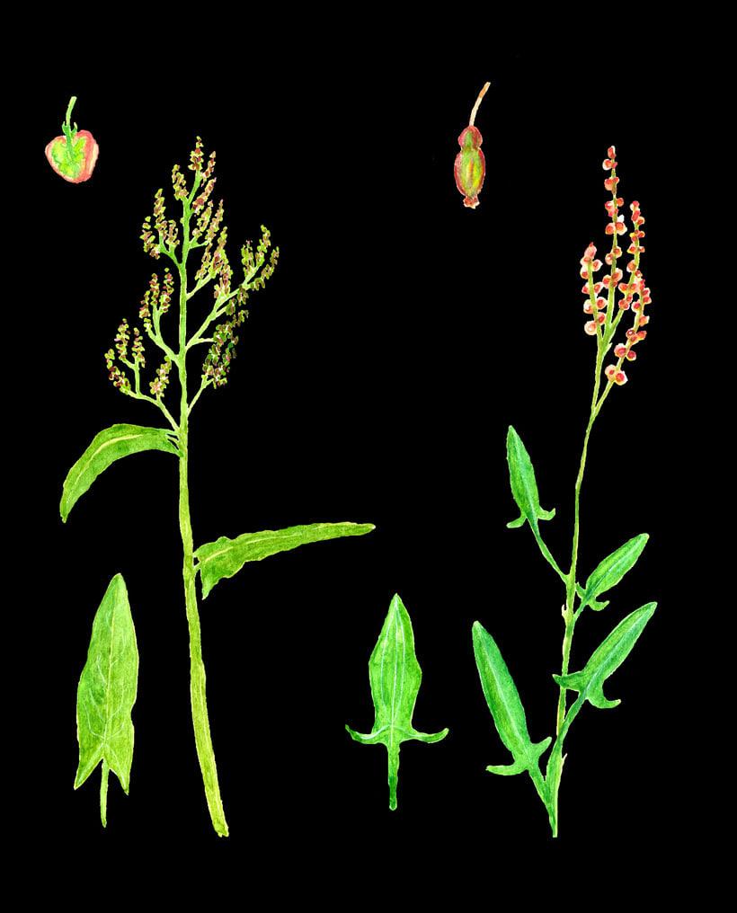 herbarium 14