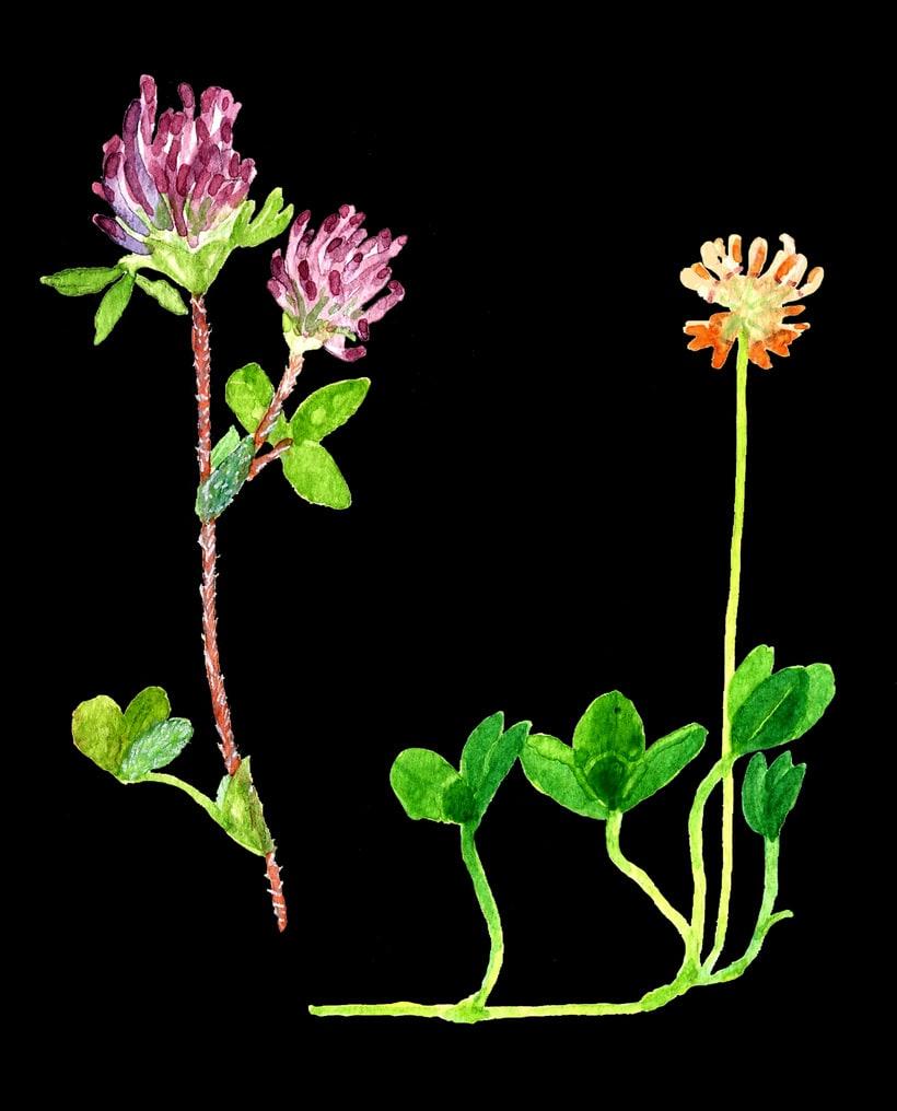 herbarium 15