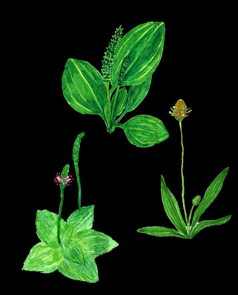 herbarium 16