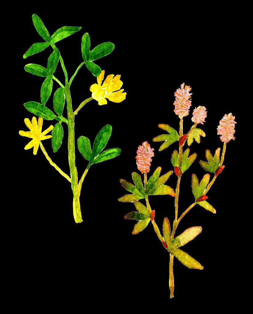 herbarium 17