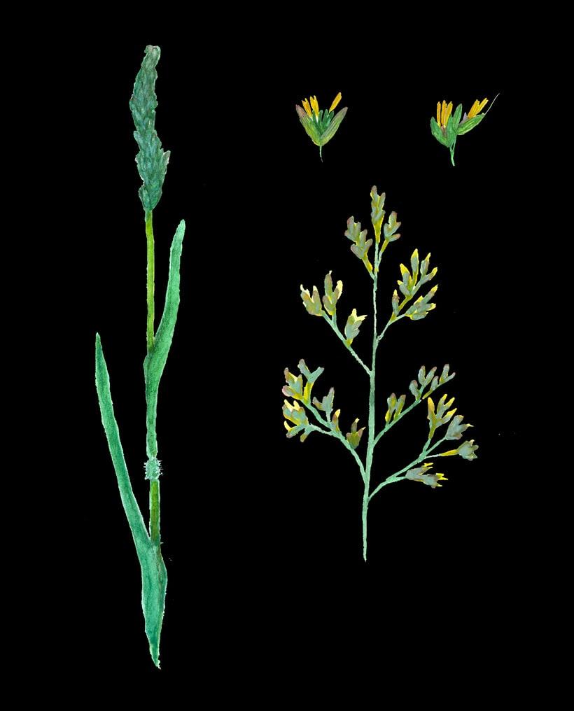 herbarium 21