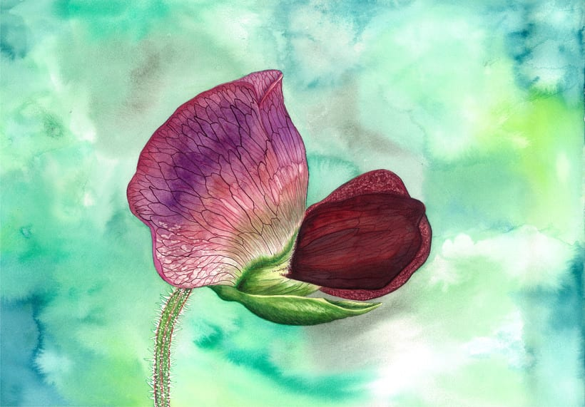 Flor del guisante en acuarela 0